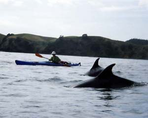 Kayaking with dolphins
